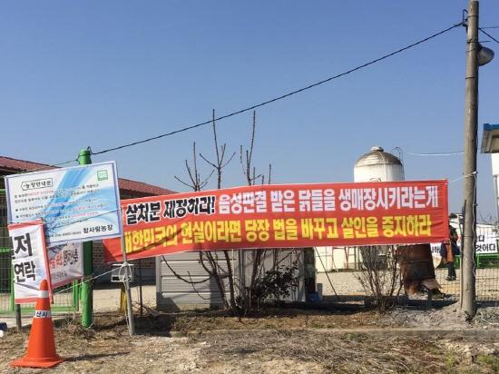 정부의 무분별한 살처분에 항의하며 예방적 살처분을 거부하고 있는 전북 익산의 동물복지농장