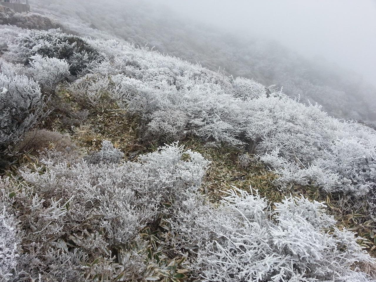 한라산 영실계곡1 영실계곡에 눈꽃이 피었다. 2016년 11월 23일
