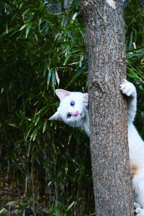 후쿠시마에서 '살처분'을 기다릴 운명에서 벗어나 '따스한 손길'을 받아 살아갈 자리를 얻은 고양이. 이 고양이 한 마리는 무엇을 말해 줄까요.