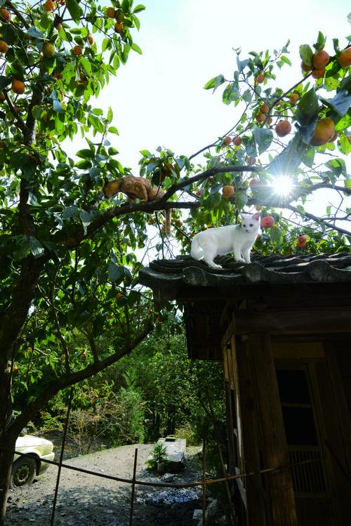 나무를 탄 두 고양이