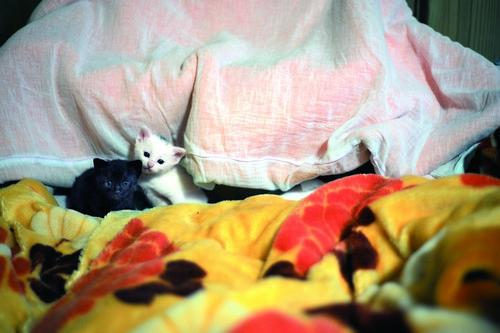 후쿠시마에 남은 고양이는 어느덧 새끼를 낳기도 했다.