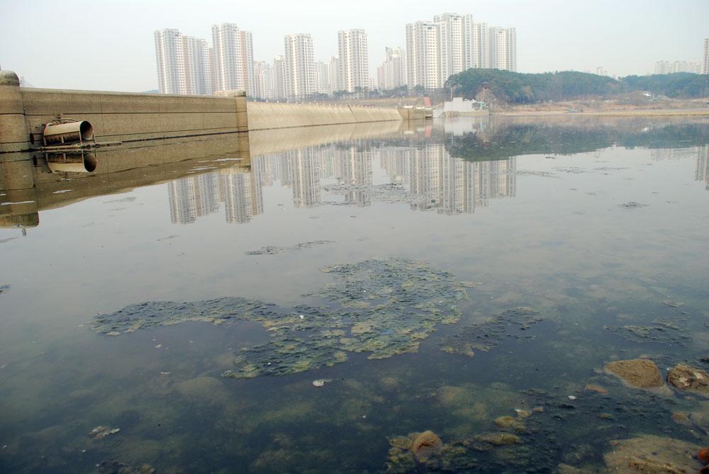 물 빠진 세종보는 온통 녹조류 사체로 가득하다. 심한 악취까지 진동하면서 접근도 쉽지 않다.