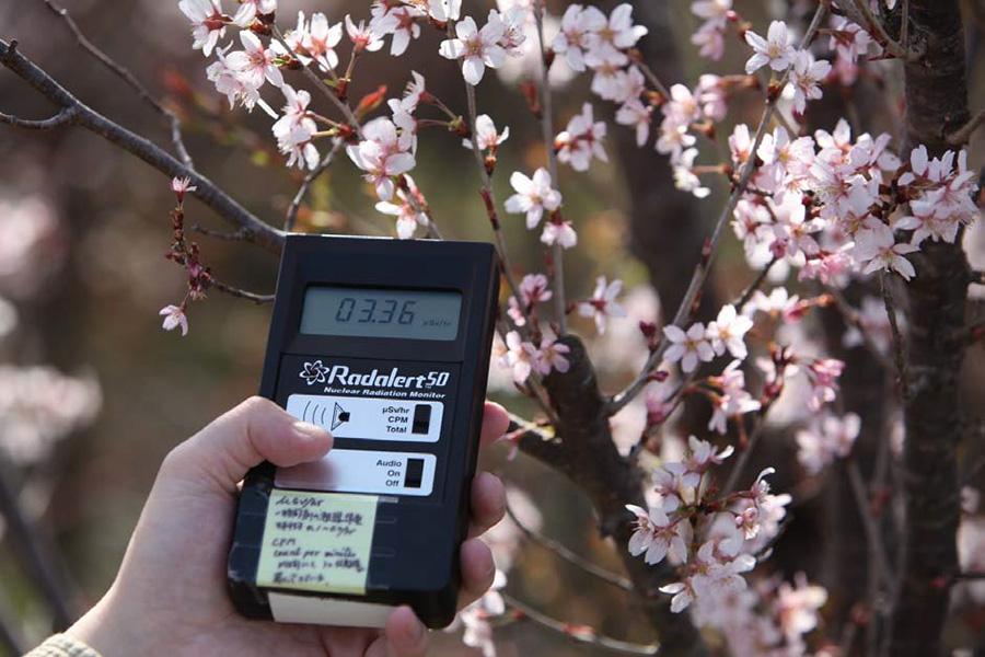 후쿠시마현 후쿠시마시 하나미산에 꽃들이 활짝 피었다. 원전에서 60km이상 떨어진 지역임에도 방사능이 3.66uSv로 검측되었다