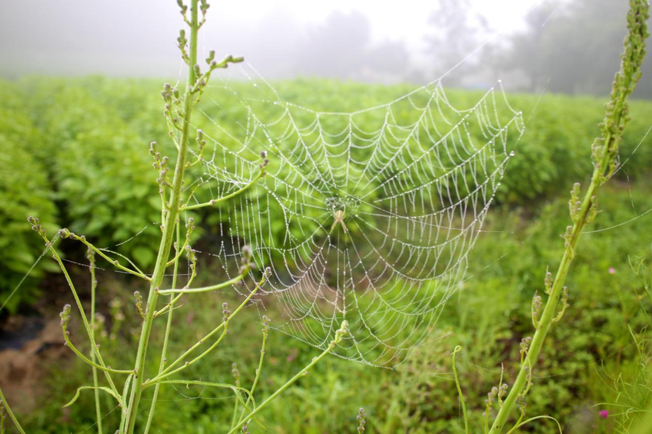 풀줄기 사이에 쳐진 촘촘한 거미줄 한가운데, 몸이 맑은 거미 한 마리가 지독하게 집중한 자세로 매달려있다.