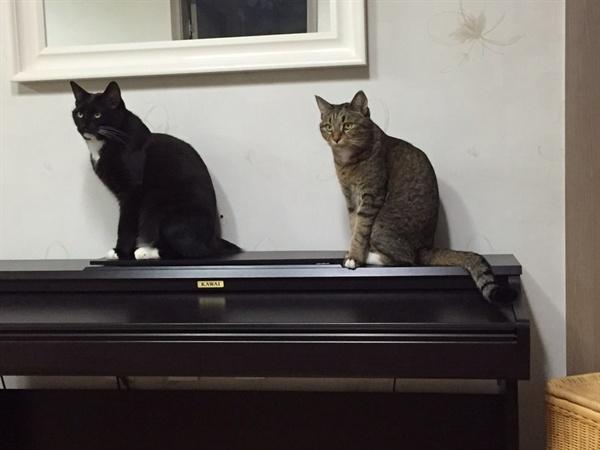 나를 '청소 지옥'으로  몰아넣은 고양이들. 턱시도를 입은 녀석이 루루, 갈색 고등어가 라라다. 루루와 라라