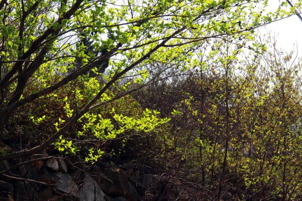 들풀들이 몽글몽글 돋아 연둣빛으로 출렁대는 사이로 초록빛 나뭇잎들이 살랑거린다.