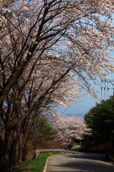 일상에서 맞은 4월의 설국 풍경에 내 마음도 초록빛으로, 연둣빛으로, 분홍빛으로 물들었다.