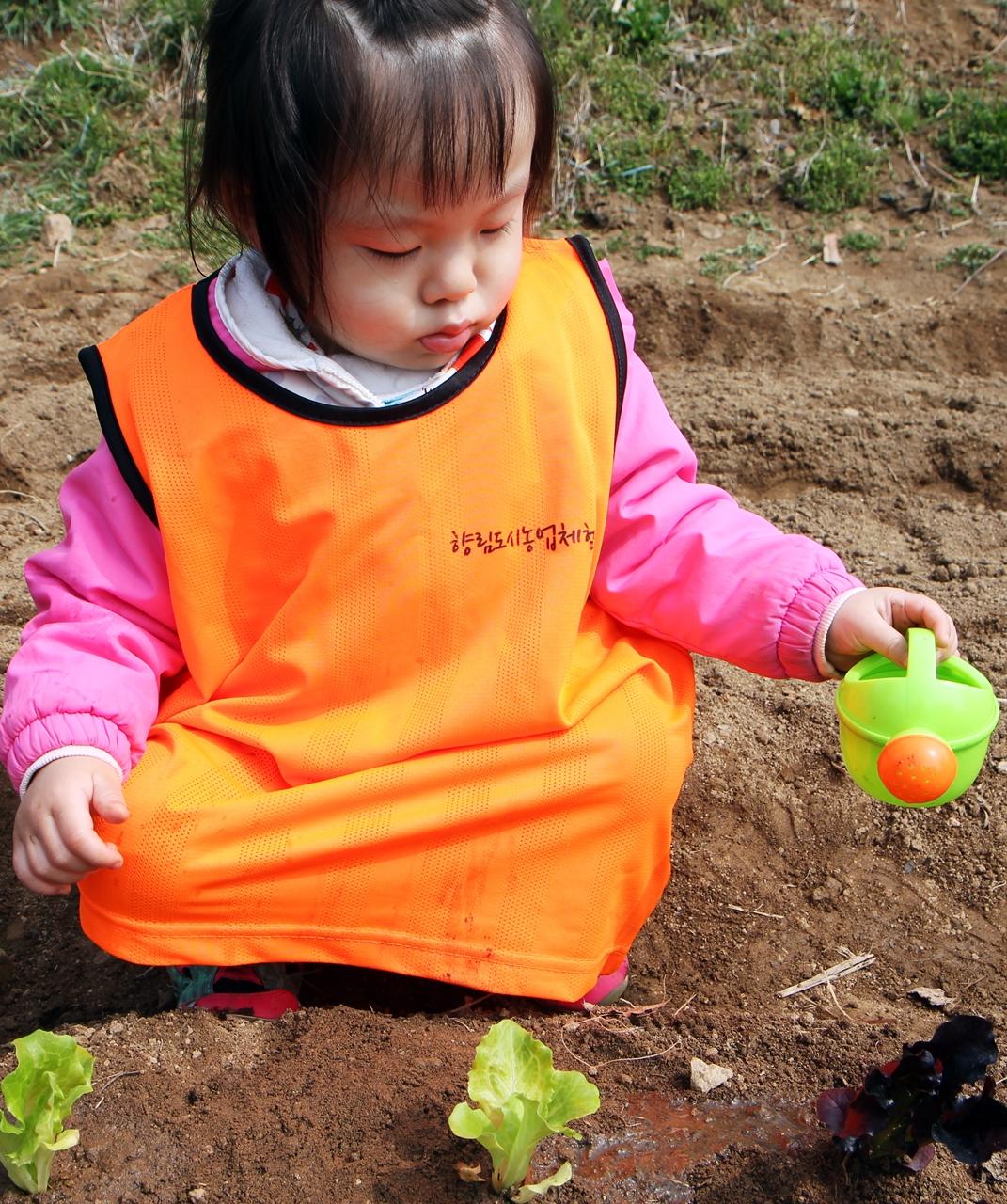 아기농부 아린(3)이가 상추에 물을 뿌리고 있습니다.