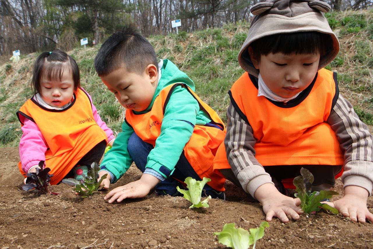 성아어린이집 세 아기농부.