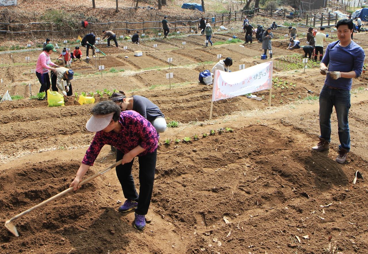 시골농부 고창댁이 익숙한 솜씨로 괭이질을 하고 있습니다.