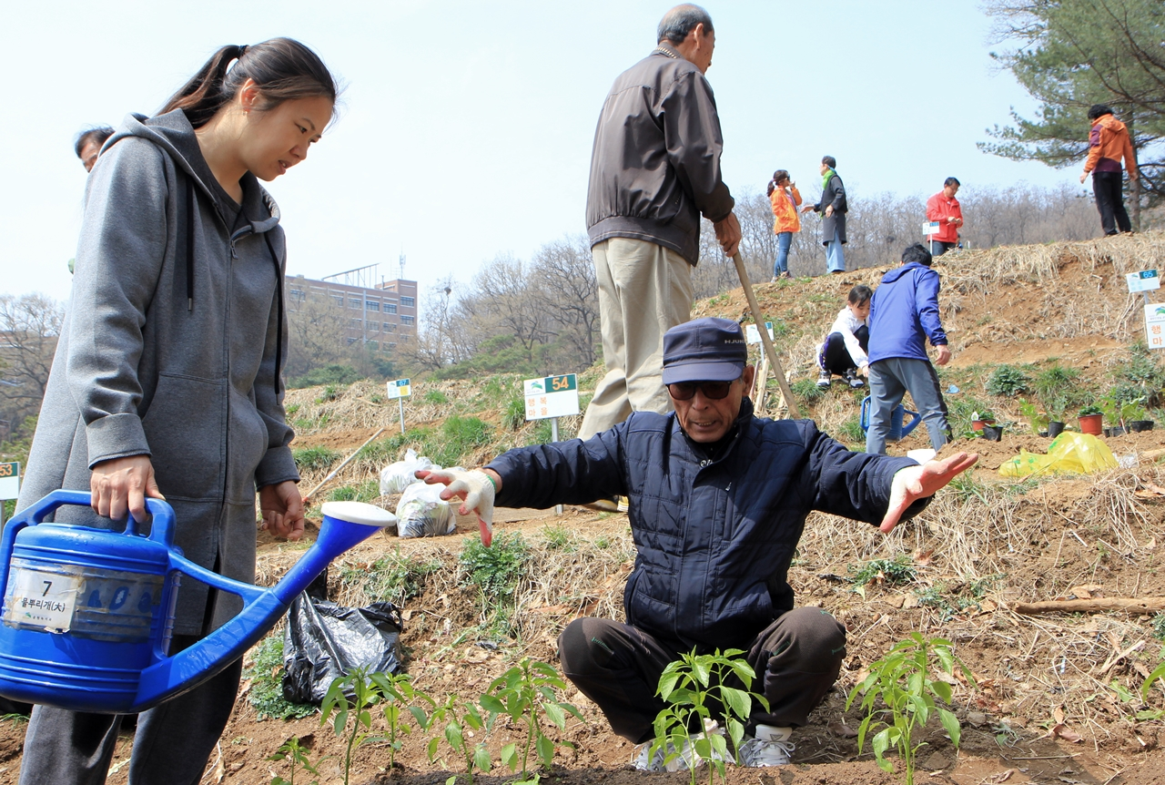 농사꾼 출신으로 도시농업원 멘토 김재진(72)씨가 초보 도시농부를 열심히 가르치고 있었습니다.