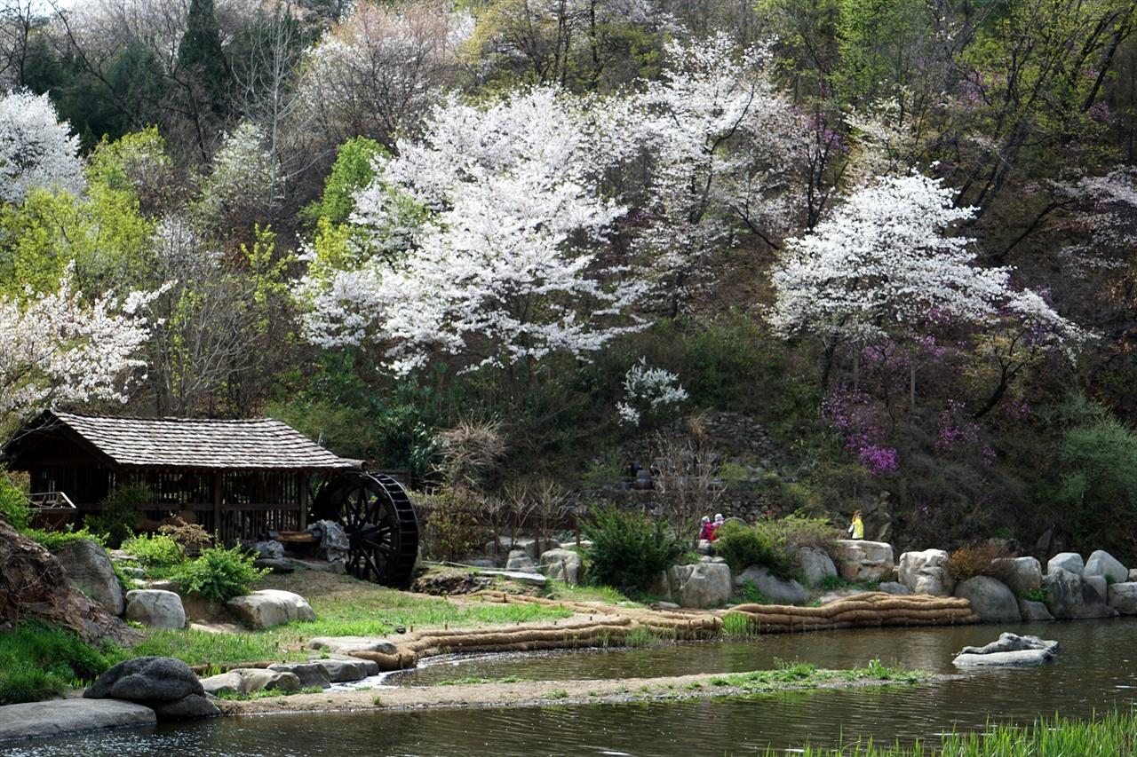 홍제천과 벚꽃