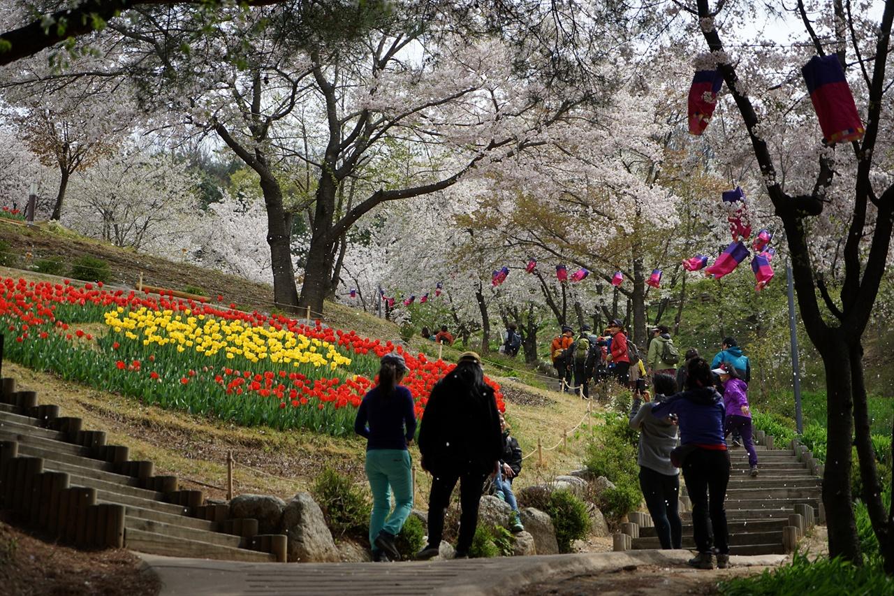안산의 벚꽃, 꽃비