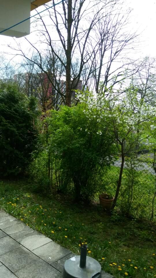거주하는 뮌헨의 아파트 정원