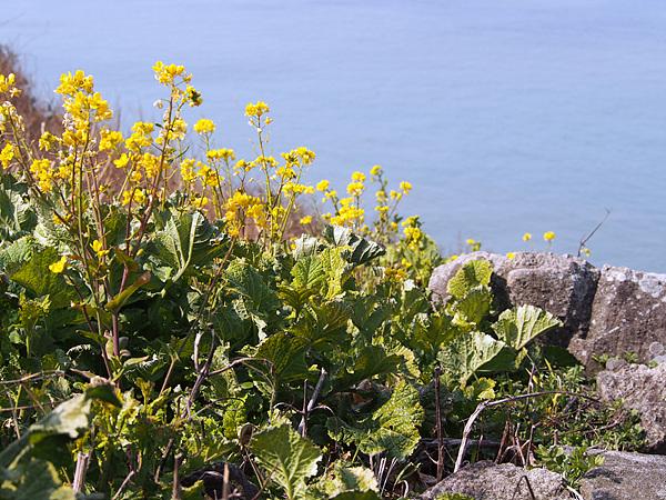 광도 바닷가에 예쁜 꽃이 피었다