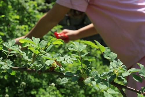 이 어여쁜 싹은 맛난 나물로 거듭납니다.