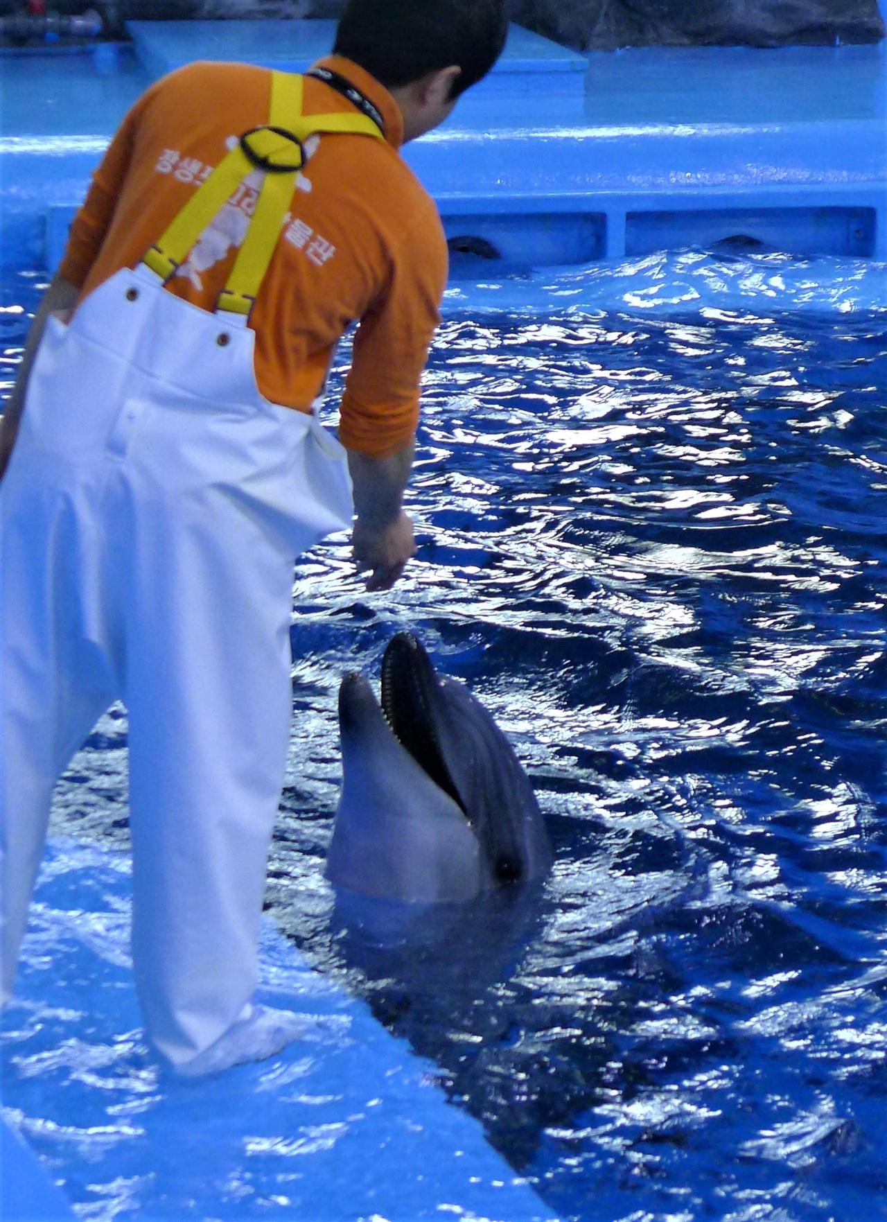 울산 남구 장생포 고래생태체험관에서 30분간 고래생태설명회에 동원됐던 돌고래 1마리가 휴식시간 조련사로부터 먹이를 받아 먹고 있다.