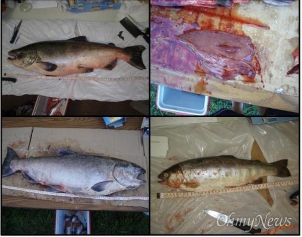 """수잔 프리키는 녹조물에 사는 어류를 연구한 결과 """"녹조의 독성이 어류의 간에 축적된다""""고 했다."""
