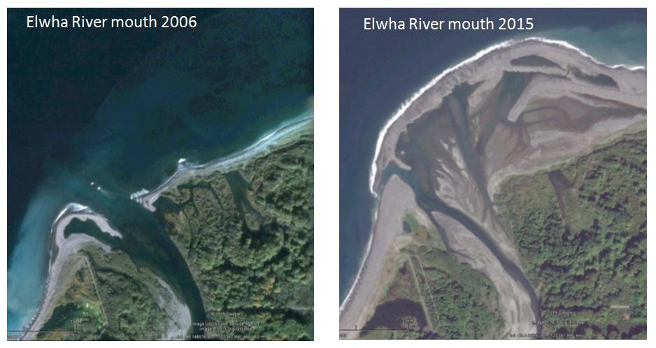 2011년 엘와댐이 폭파되면서 엘와강 하구에는 거대한 검은 모래 삼각주가 만들어졌다.