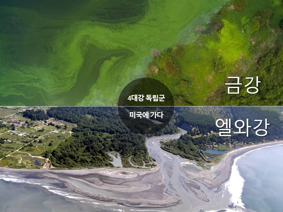 엘와강은 지난 2011년과 2014년 댐을 철거하면서 생태계가 회복하고 있다. 반면, 금강은 오늘도 4대강 사업으로 죽어가고 있다.