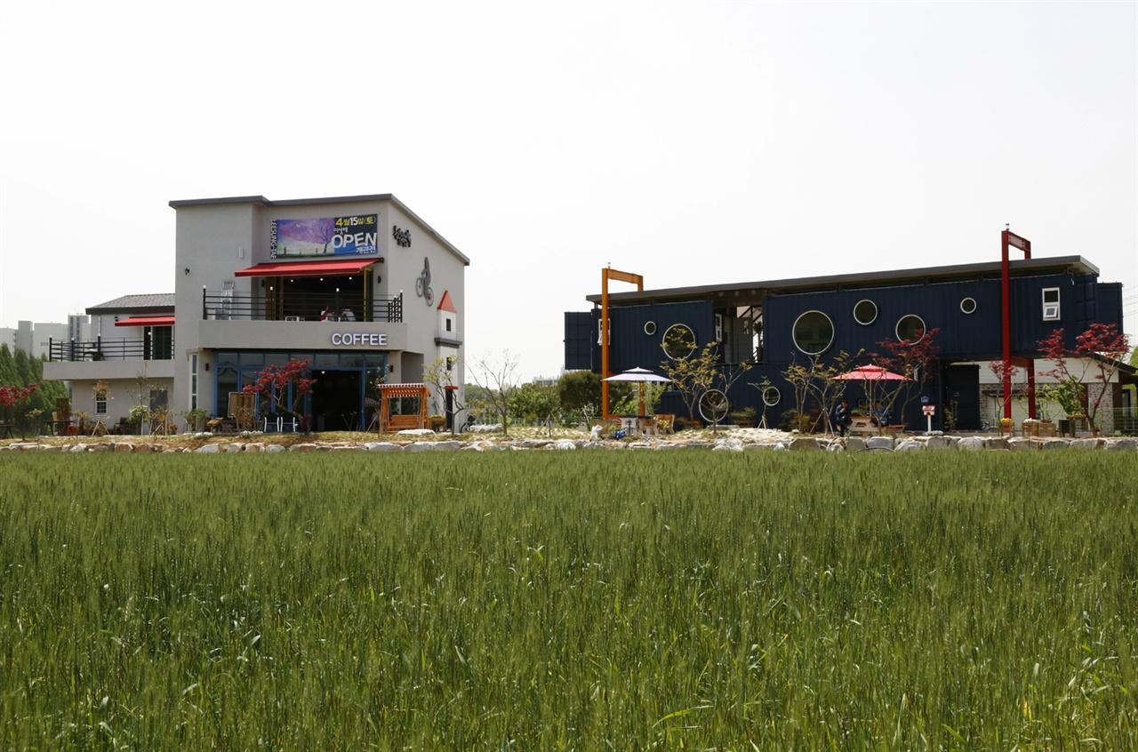 담양에 들어선 남촌미술관카페. 미술관 앞에는 따스한 햇살에 여물어가는 우리밀밭이 펼쳐진다.