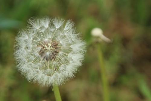 마음에 어떤 씨앗을 심느냐에 따라 삶이 달라지지 싶습니다. 젊은 이웃님들 마음에 고운 꿈이 깃들기를 빌어요.