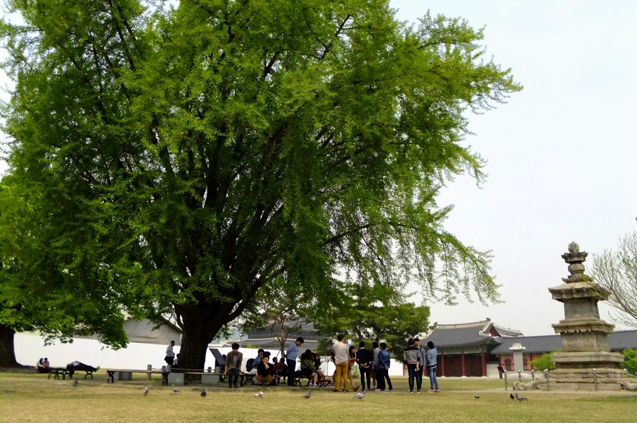 시민들에게 쉼과 그늘을 내어주는 고궁의 고마운 나무들.