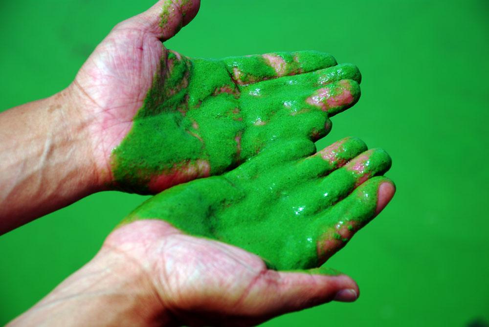 손으로 강물을 떠보았다. 끈적끈적 녹색 페인트를 손에든 느낌이다.
