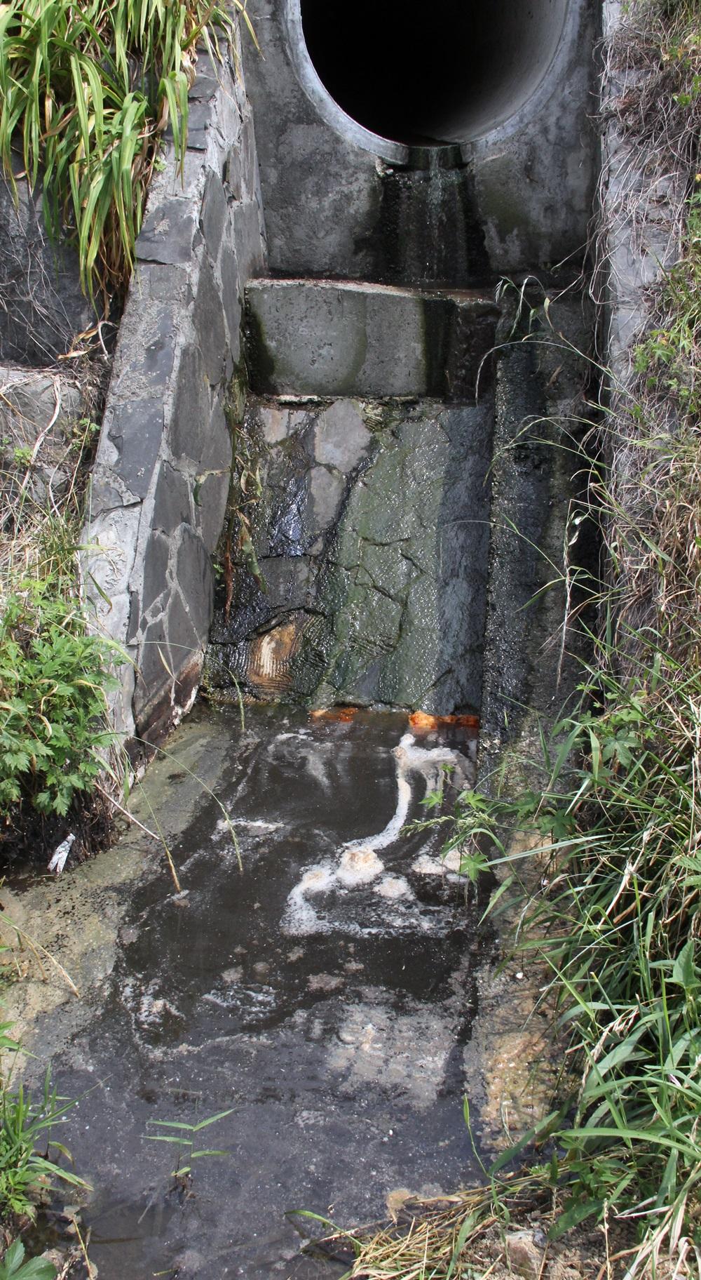인근 주택가와 상가에서 하천으로 유입되는 우수관에서도 역한 냄새를 풍기고 있다.