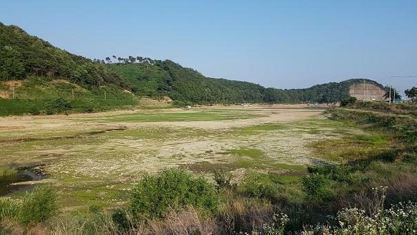 봉림 저수지의 맞은 편 상황. 이곳은 아예 물이 없다.
