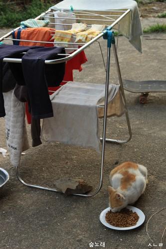 빨래를 너는 어느 날. 고양이밥을 빨랫대 옆에 놓으니 마을고양이가 살그마니 다가와서 냠냠합니다.