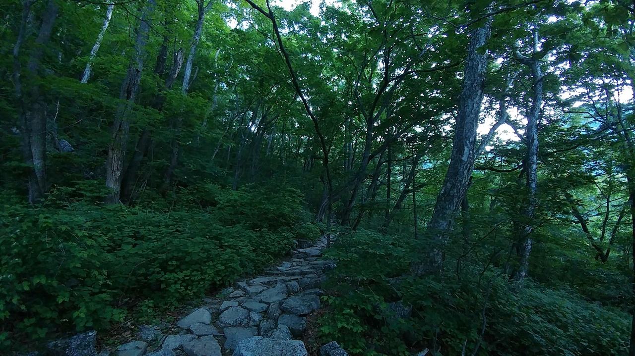 설악산 등산로 제1쉼터부터 설악폭포까진 거리는 더 길어도 크게 어렵지 않다고 소개했듯 새벽 이른 시간 바람 선선할 때 등산을 시작했다면 이 지점을 통과할 때까지는 따가운 여름 햇볕도 괴롭히지 않는다. 오히려 해발 1,000m에 이르는 지점에 이토록 키 큰 나무들이 많고, 숲이 잘 발달되어 있다는 사실에 놀라며 걷기 좋은 길을 즐길 수 있다.