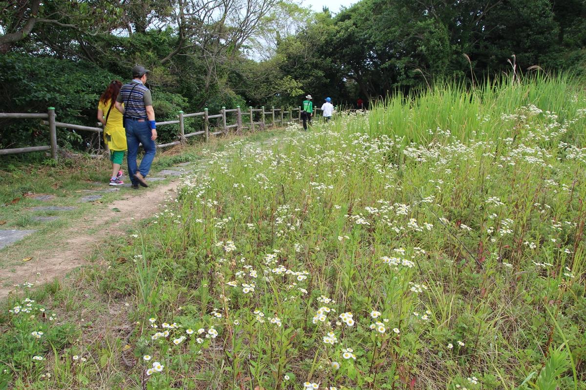 산자락에는 개망초 하얀 꽃이 흐드러지게 피었다. 툭