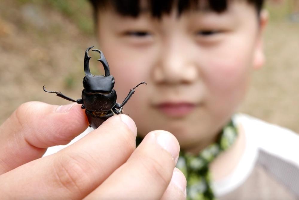 숲속 곤충 숲속에서는 아이들에게 살아있는 놀잇감이자 친구가 된다.