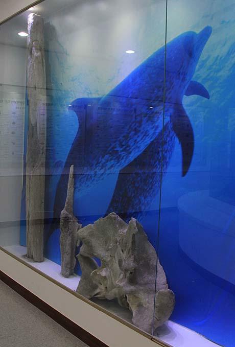 흑산도 예리 자산문화관에 전시돼 있는 고래뼈.
