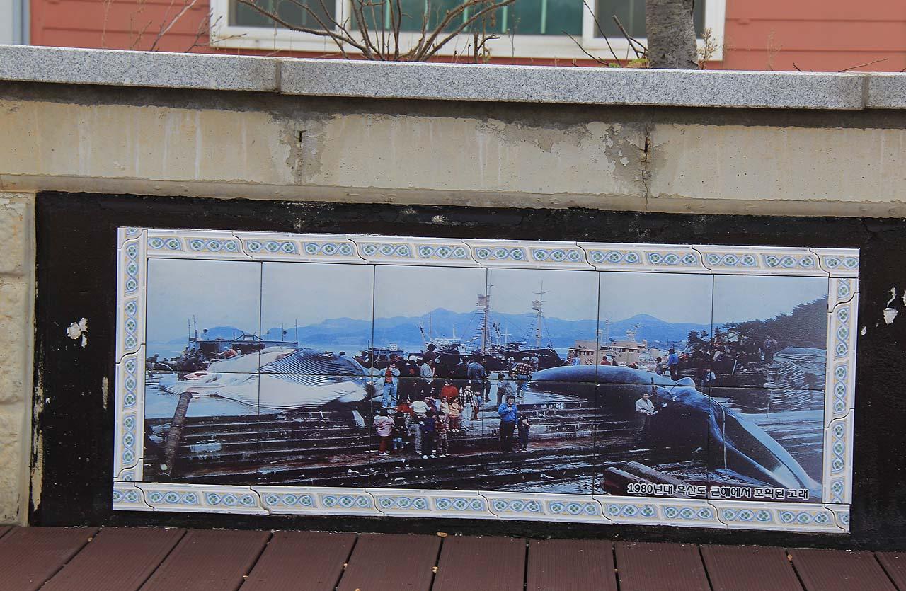 흑산도 고래공원 가는 길에 타일 사진으로 전시돼 있는 고래 사진. '1980년대 흑산도 근해에서 포획된 고래'라고 씌여 있다.
