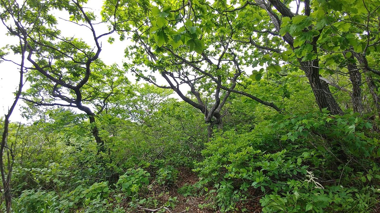 서북주릉 숲길 끝청봉에서 한계령삼거리로 나가는 능선에서는 숲에 가려 전망을 기대할 수 없다. 그러나 다음 장소로의 이동엔 이 또한 최상의 조건이 된다.