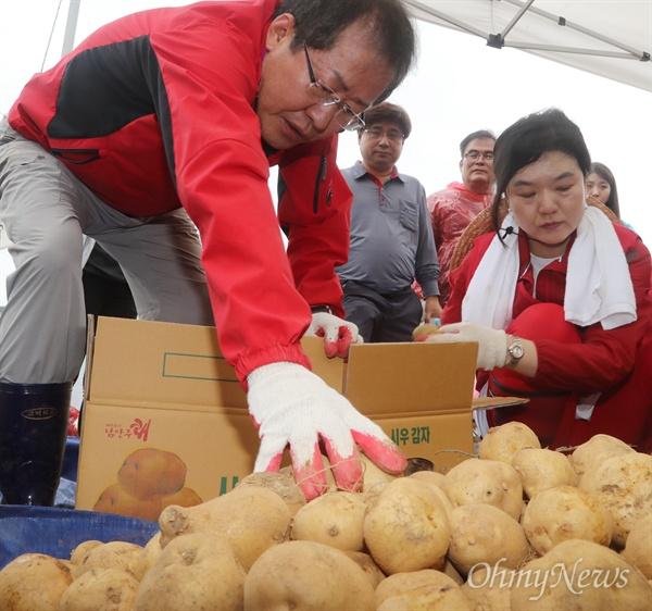 감자 담는 홍준표 자유한국당 새 지도부 선출을 위한 7.3 전당대회가 열린 3일 오전 경기 남양주시 조안면 시우리 한 감자농가에서 홍준표 후보가 감자를 상자에 담고 있다.