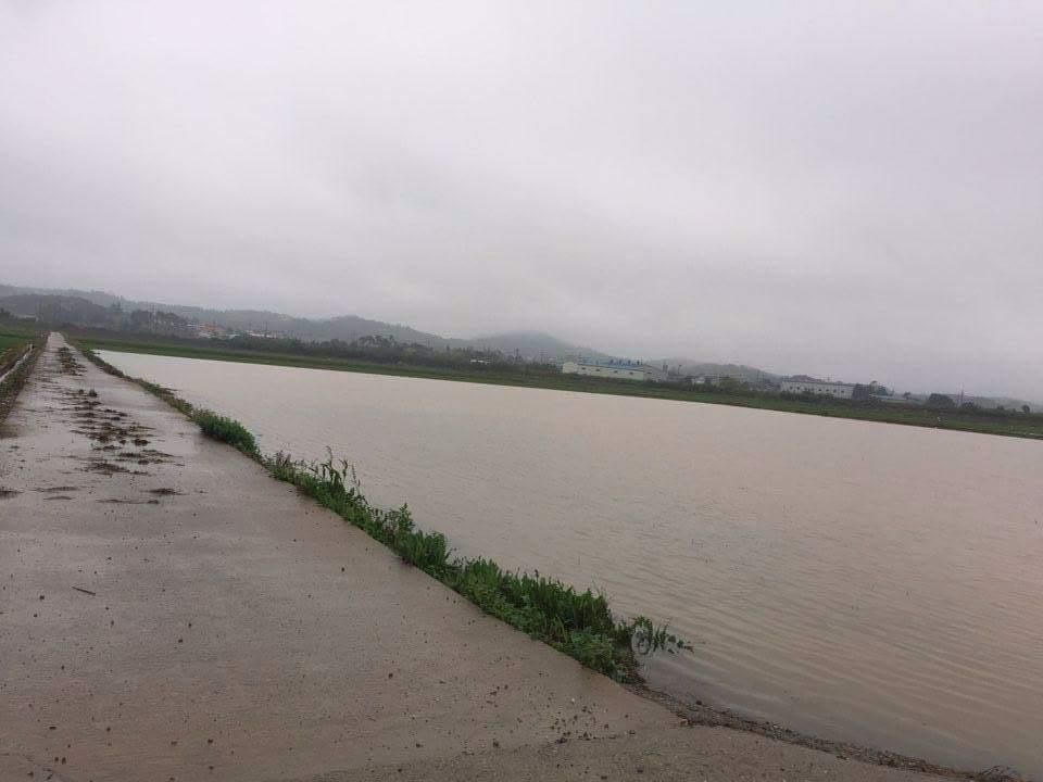 홍성에서는  3일 200mm가 내린 폭우로 인해 논옆의 배수로가 넘쳐 농경지가 침수되었다.