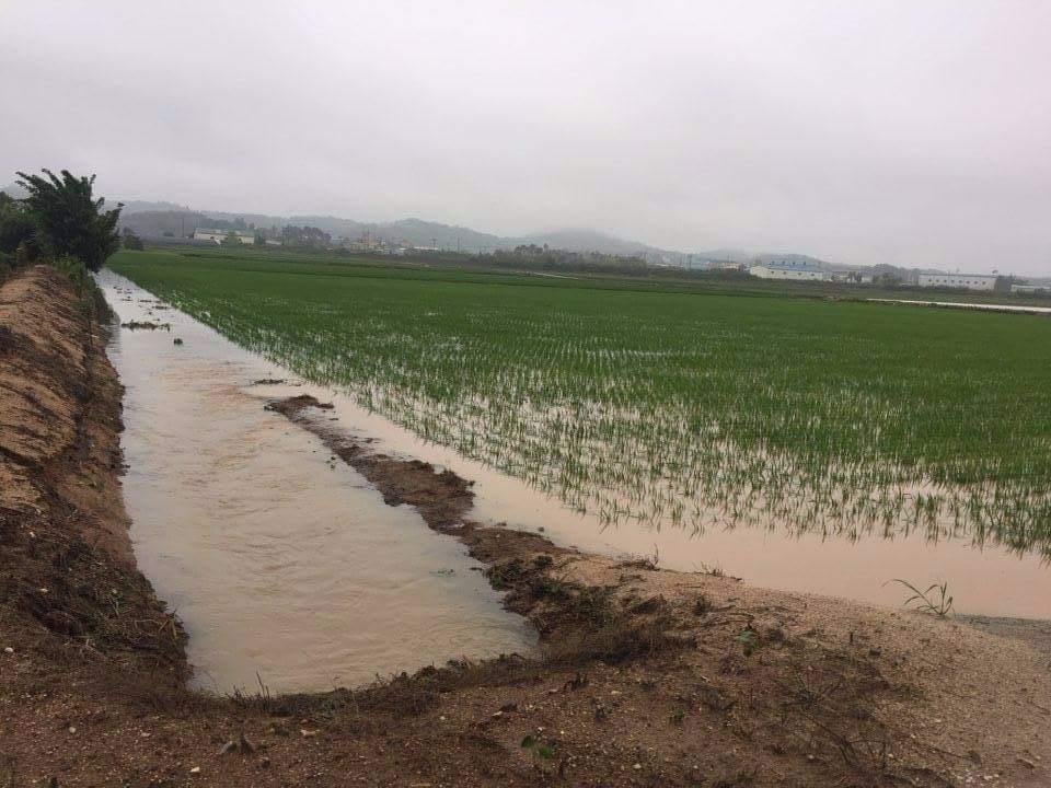 3일 200mm의 폭우가 내린 홍성군 금마면 한 농가의 논이 배수로의 물이 넘처 침수되고 있다. 홍성에서는 지난 2일부터 비가 내리기 시작해서 4일(11시45분현재)까지 최대 221mm가 내리는등 평균 125mm가 내려 가뭄해갈이 되었으나 비로 인한 또 다른 피해가 발생하고 있다