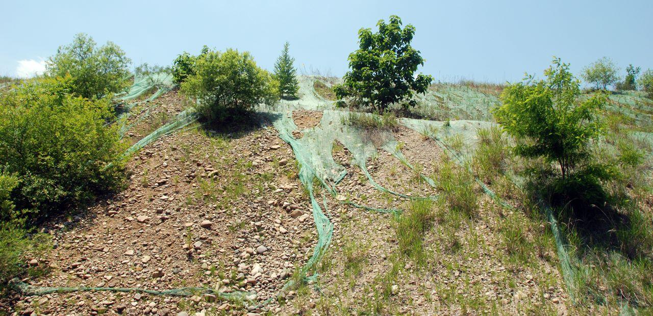 4대강 준설토 동산에 나무가 자라고, 그물막은 찢겨 누더기가 되었다.