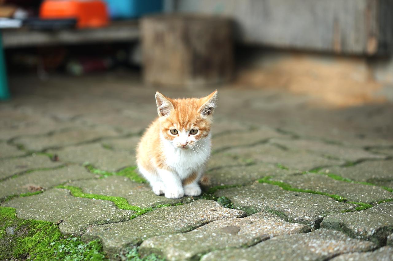 새끼고양이 물골 할머니의 친구가 되어 살아가는 새끼 고양이, 적적한 물골에 할머니 말벗이 생겼다.