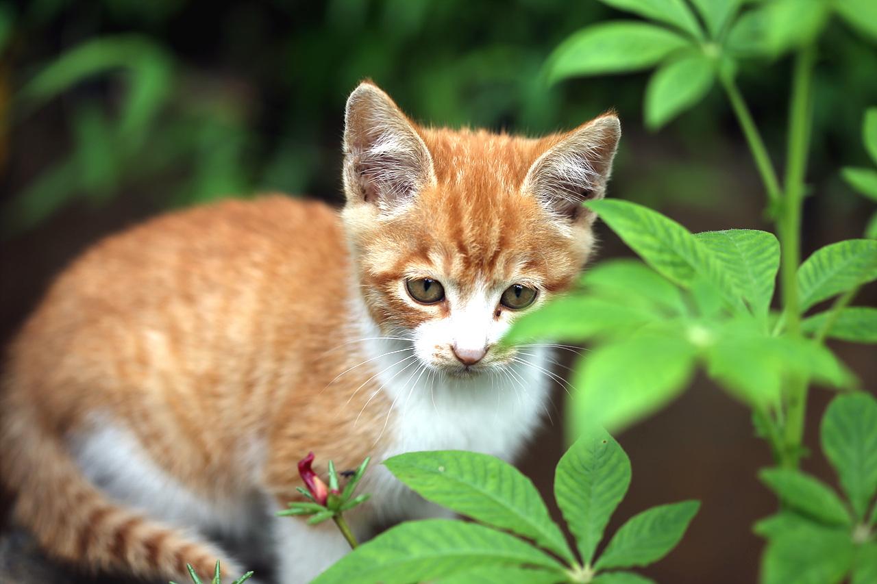 새끼고양이 꽃밭에서 노는 새끼고양이, 그들에게 모든 것은 신비스러운가 보다.