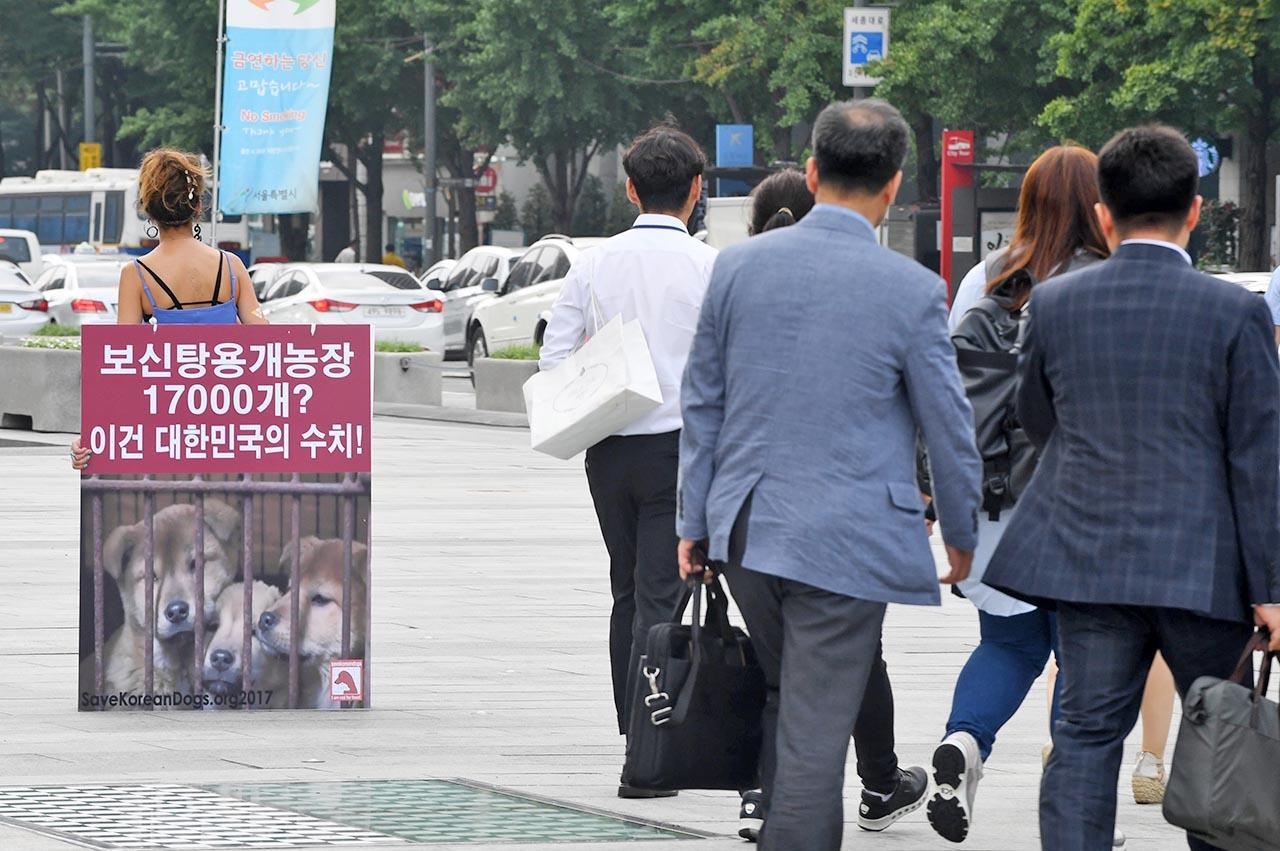 '보신탕용 개농장'은 대한민국의 수치 초복을 하루 앞둔 11일 오전 동물보호단체 세이브코리언독스에서 활동하는 영국인 루시아 바버(Lucia Barber) 씨가 서울 종로구 광화문광장에서 '개 식용 반대' 1인시위를 펼치고 있다.