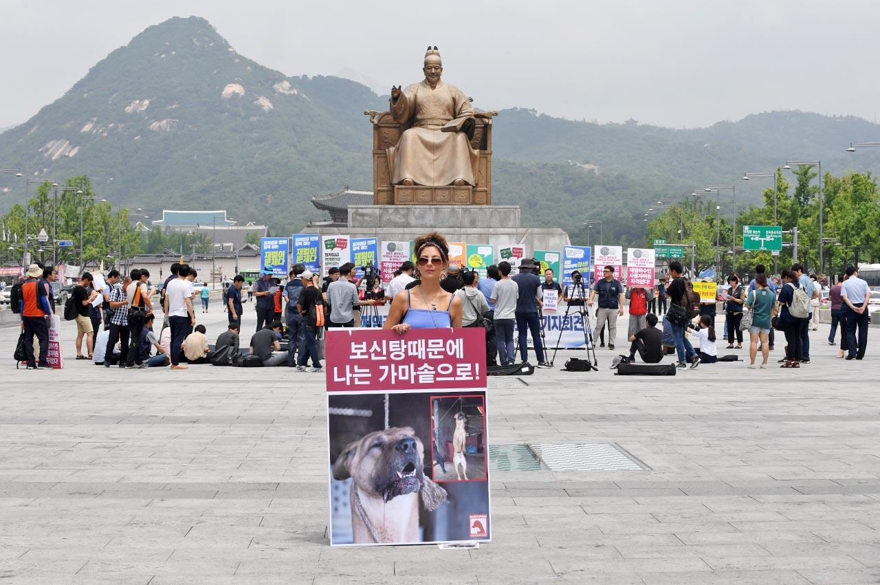 초복을 하루 앞둔 11일 오전 동물보호단체 세이브코리언독스에서 활동하는 영국인 루시아 바버(Lucia Barber) 씨가 서울 종로구 광화문광장에서 '개 식용 반대' 1인시위를 펼치고 있다.