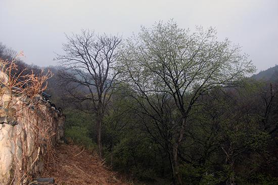 부처님 진신사리를 모신 적멸보궁 담장 옆으로 저 멀리 산 속으로 가는 좁은 길이 나 있다. 10여 년 전에 찾아갔을 때에는 '금강산 가는 길'이라는 작은 표지판이 있었는데 2017년 방문에서는 그 표지판을 찾을 수 없었다.