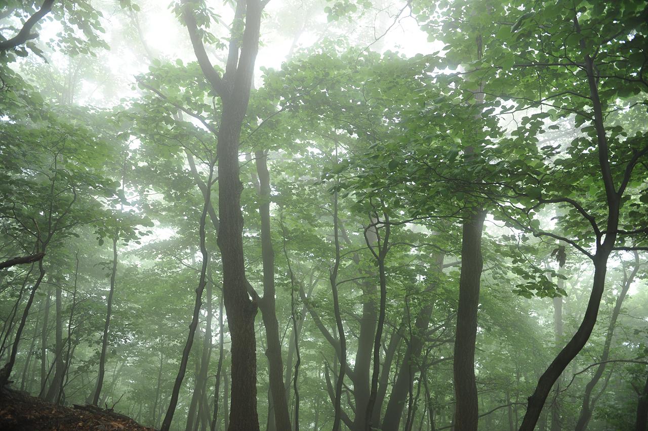 비 내리는 숲 속을 걸어갑니다.