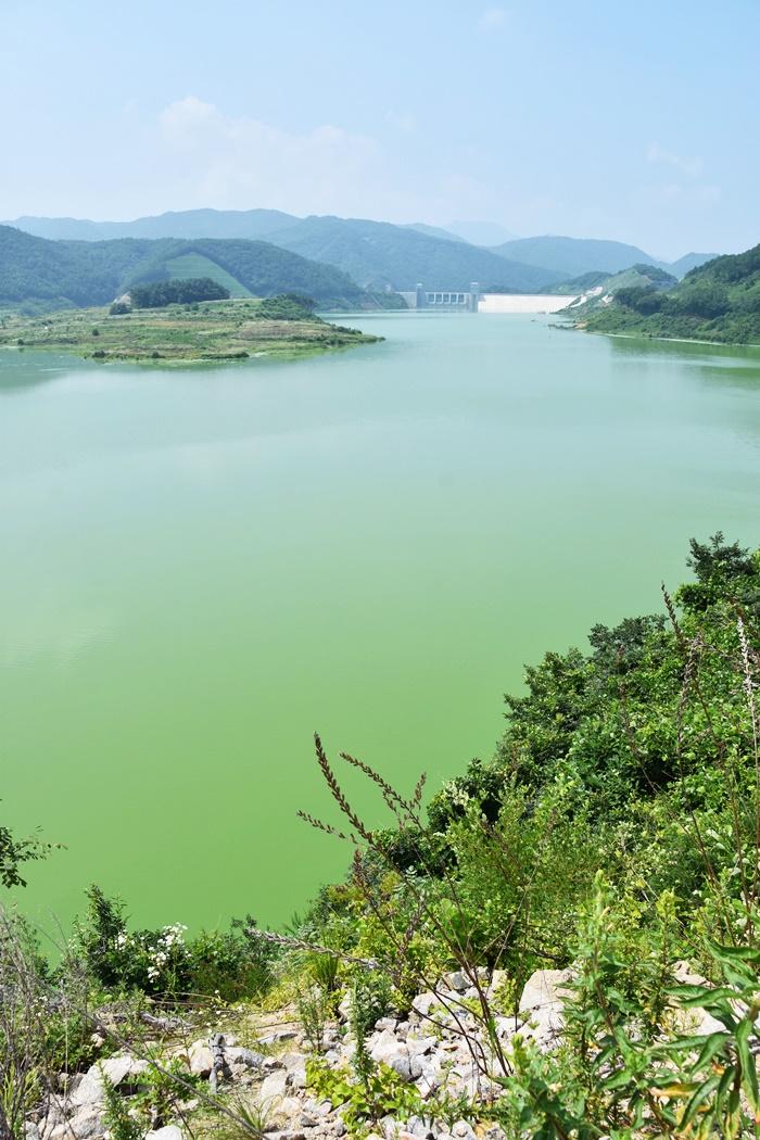 녹조라떼 배양소 영주댐은 가라, 대신 국립공원 내성천이여 오라!