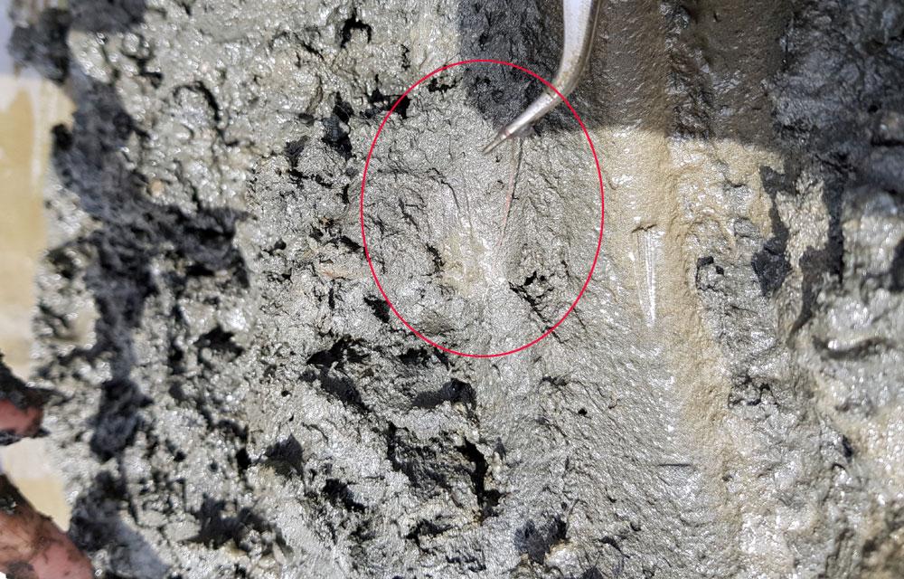 금강에서 발견되고 있는 실지렁이는 머리카락보다 조금 더 굵으며 길이가 10~15cm 정도를 보이고 있습니다.