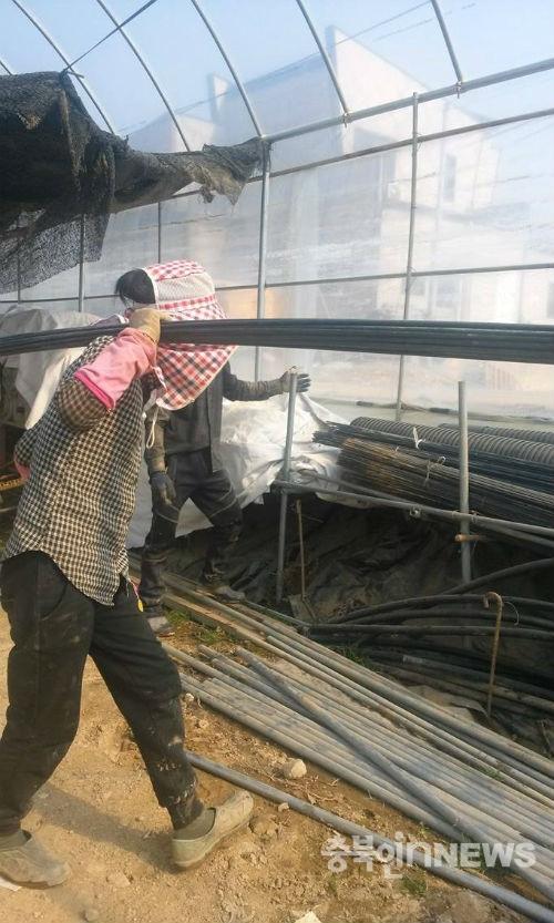 캄보디아출신의여성노동자가비닐하우스에서철근을나르고있다.(사진지구인의정류장)